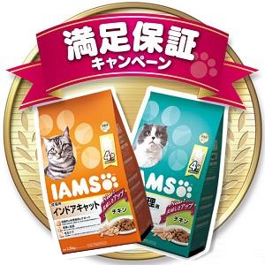 IamsCat_3.jpg