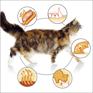 PROPLAN-CAT_OPTIDARMA_ADULT_3