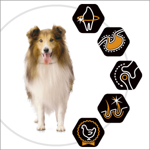 PROPLAN-DOG_OptiLife-Medium_Adult_3