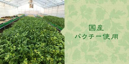 国産パクチー使用 種から選定し、国内で栽培したパクチーを使用しています。栽培方法にもこだわり、加工用に適したパクチーを使用しています。