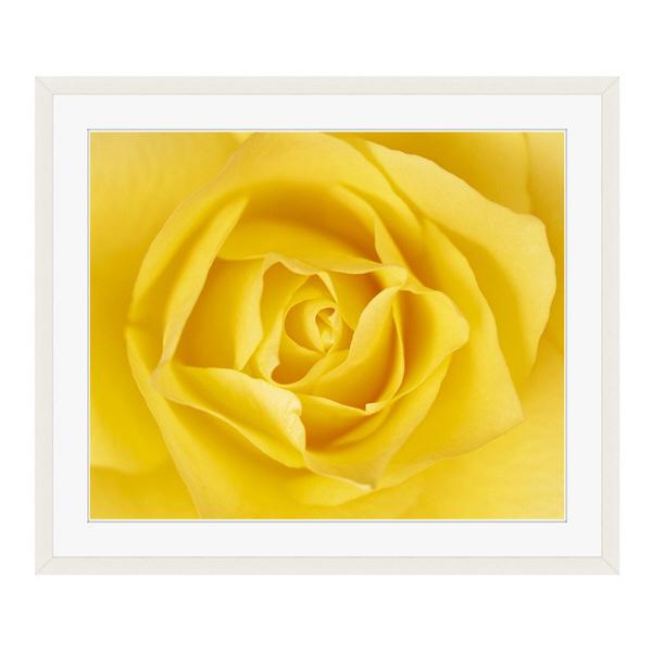 アートプリントジャパン 「黄色いバラ」 フレーム/L/ホワイト 1枚