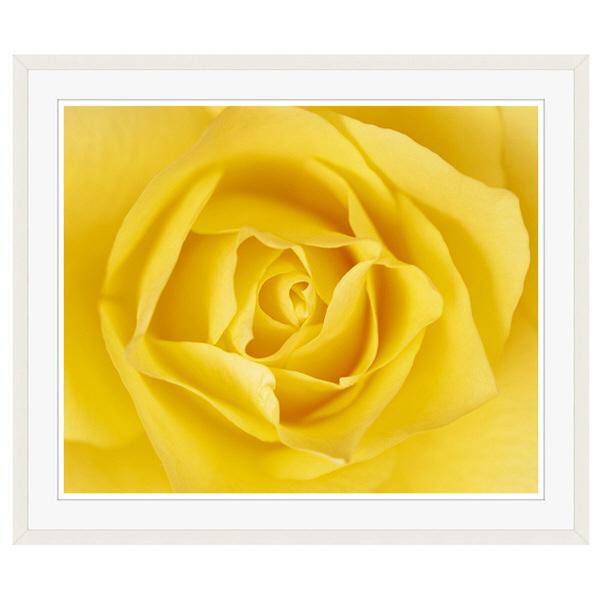 アートプリントジャパン 「黄色いバラ」 フレーム/XL/ホワイト 1枚