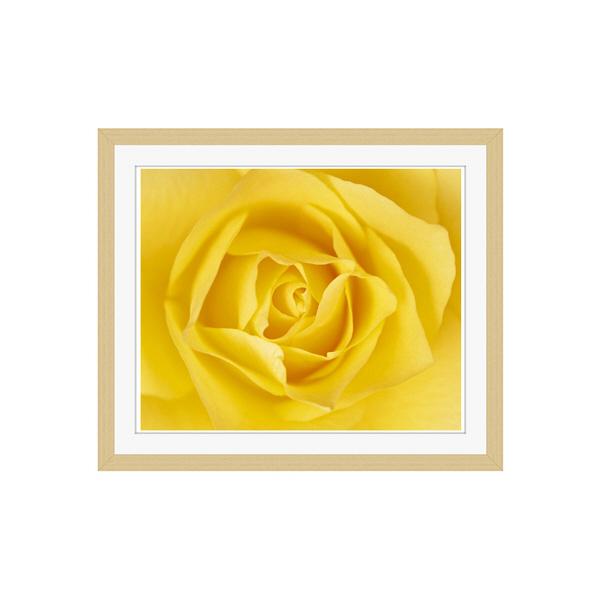 アートプリントジャパン 「黄色いバラ」 フレーム/S/木目 1枚