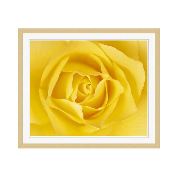 アートプリントジャパン 「黄色いバラ」 フレーム/M/木目 1枚