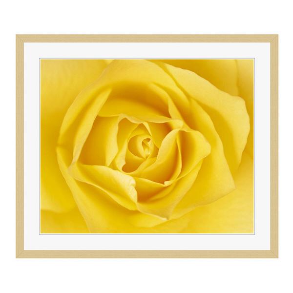 アートプリントジャパン 「黄色いバラ」 フレーム/L/木目 1枚