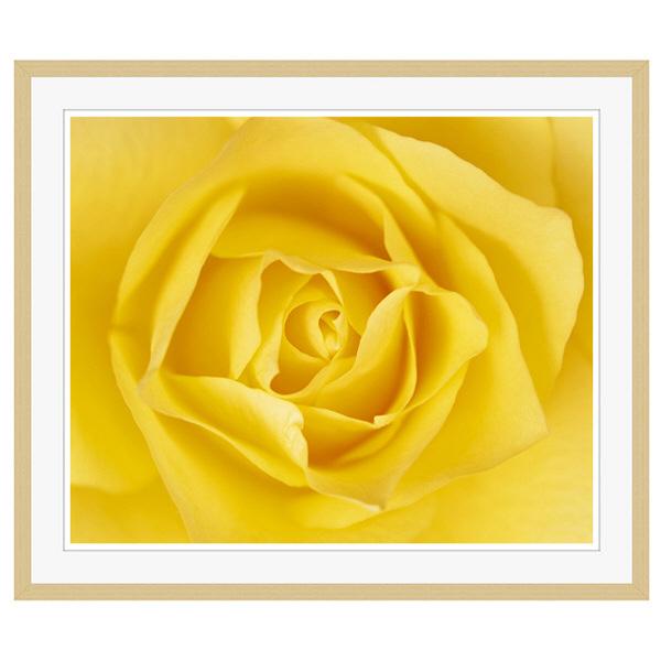 アートプリントジャパン 「黄色いバラ」 フレーム/XL/木目 1枚