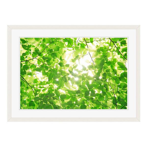 アートプリントジャパン 「新緑と光」 フレーム/L/ホワイト 1枚