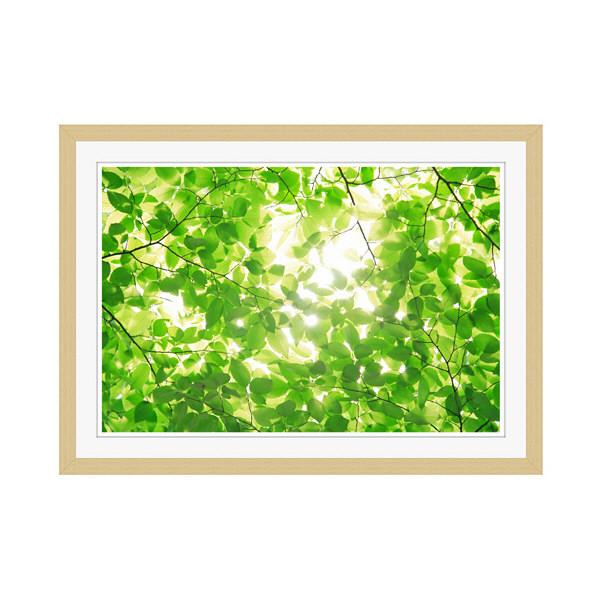 アートプリントジャパン 「新緑と光」 フレーム/M/木目 1枚