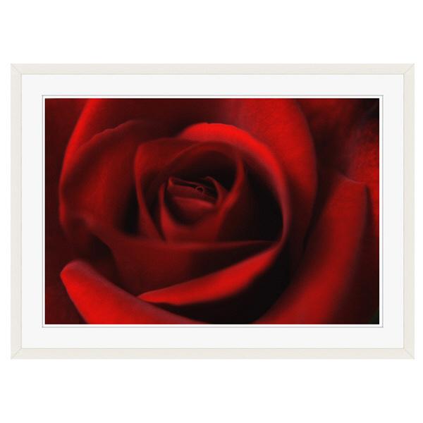 アートプリントジャパン 「Rose」 フレーム/XL/ホワイト 1枚