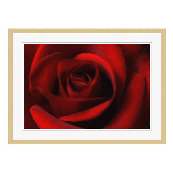 アートプリントジャパン 「Rose」 フレーム/L/木目 1枚