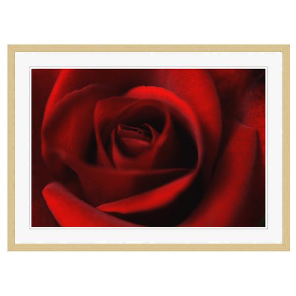 アートプリントジャパン 「Rose」 フレーム/XL/木目 1枚