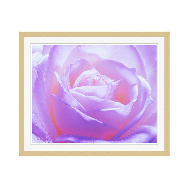 アートプリントジャパン 「紫色の薔薇」 フレーム/M/木目 1枚