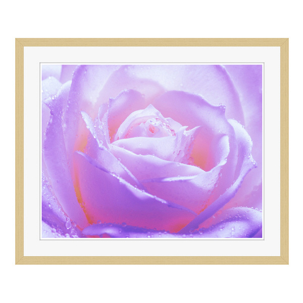 アートプリントジャパン 「紫色の薔薇」 フレーム/L/木目 1枚