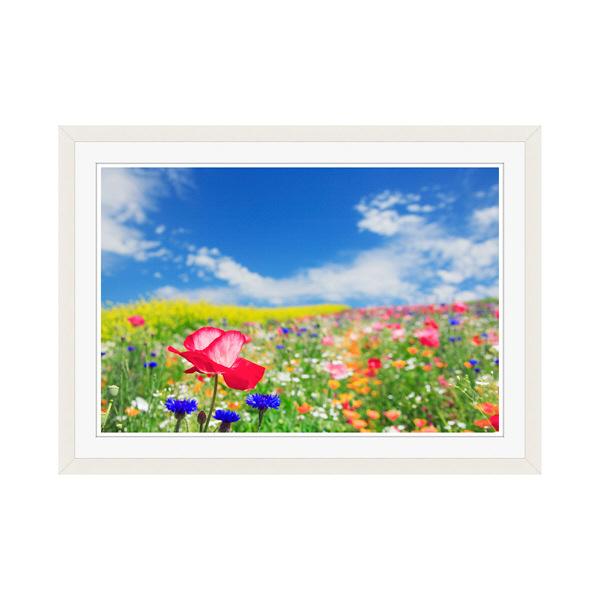 アートプリントジャパン 「花畑に咲くポピー」 フレーム/M/ホワイト 1枚