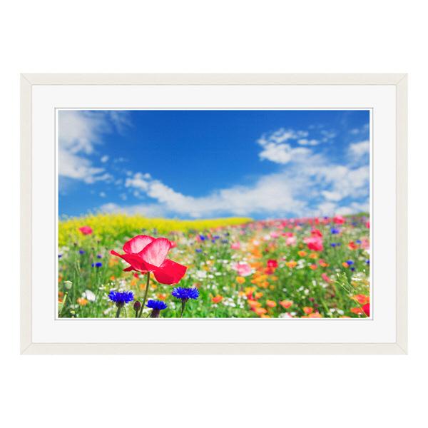 アートプリントジャパン 「花畑に咲くポピー」 フレーム/L/ホワイト 1枚