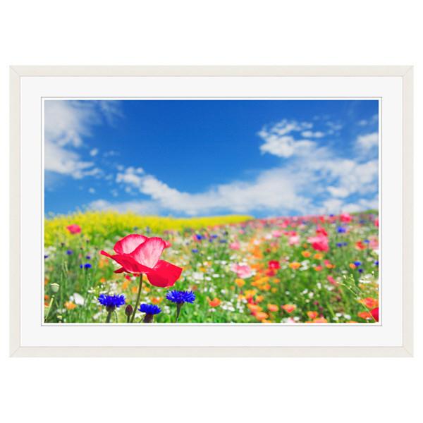 アートプリントジャパン 「花畑に咲くポピー」 フレーム/XL/ホワイト 1枚