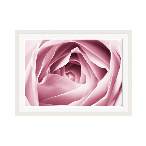 アートプリントジャパン 「Close-up View of Pink Rose」 フレーム/M/ホワイト 1枚