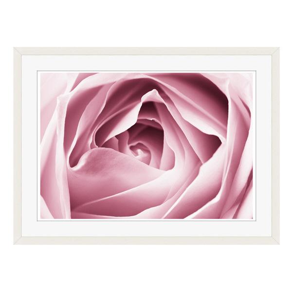 アートプリントジャパン 「Close-up View of Pink Rose」 フレーム/L/ホワイト 1枚