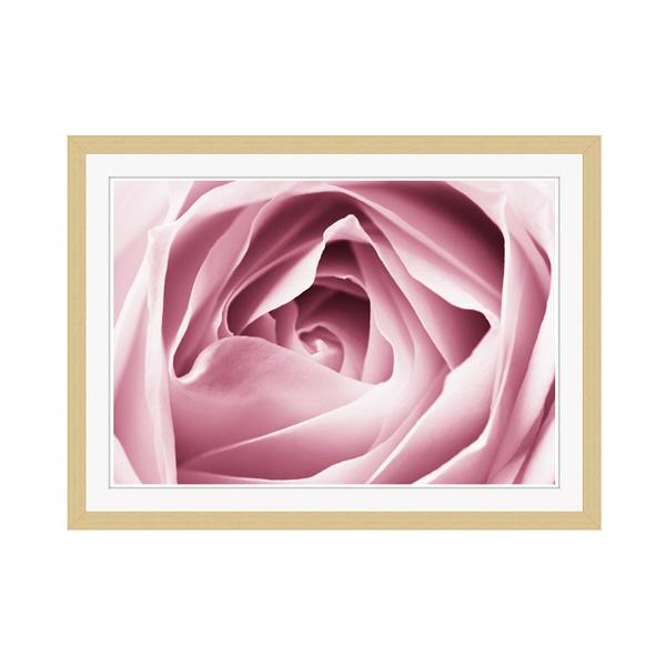アートプリントジャパン 「Close-up View of Pink Rose」 フレーム/M/木目 1枚