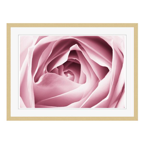 アートプリントジャパン 「Close-up View of Pink Rose」 フレーム/L/木目 1枚