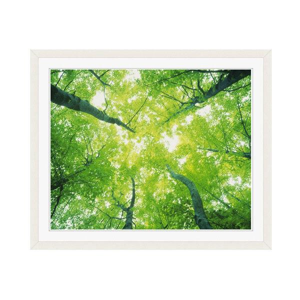 アートプリントジャパン 「森林と木漏れ日」 フレーム/M/ホワイト 1枚