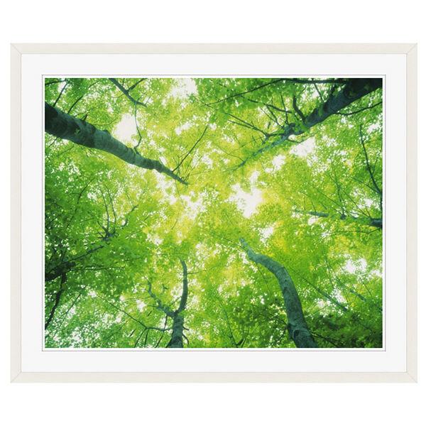 アートプリントジャパン 「森林と木漏れ日」 フレーム/XL/ホワイト 1枚