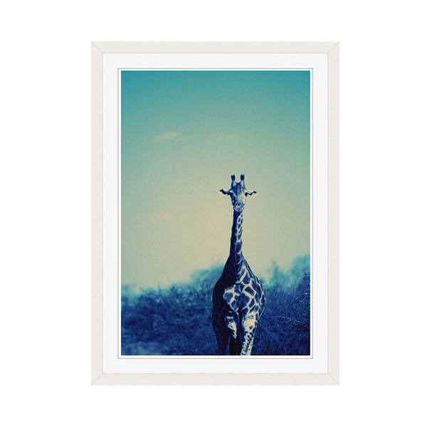 アートプリントジャパン 「Reticulated Giraffe」 フレーム/M/ホワイト 1枚