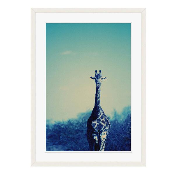 アートプリントジャパン 「Reticulated Giraffe」 フレーム/L/ホワイト 1枚