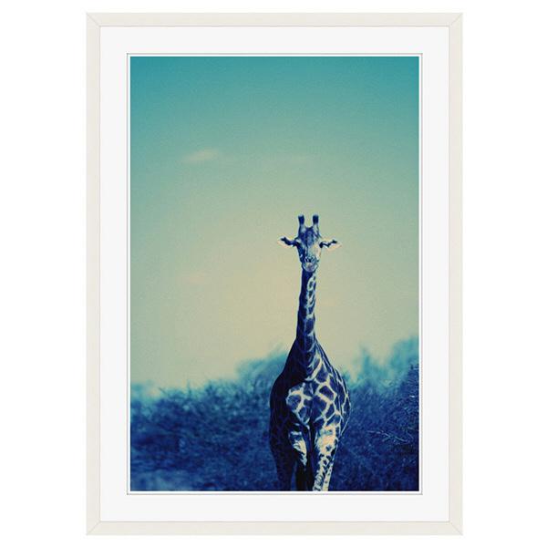 アートプリントジャパン 「Reticulated Giraffe」 フレーム/XL/ホワイト 1枚