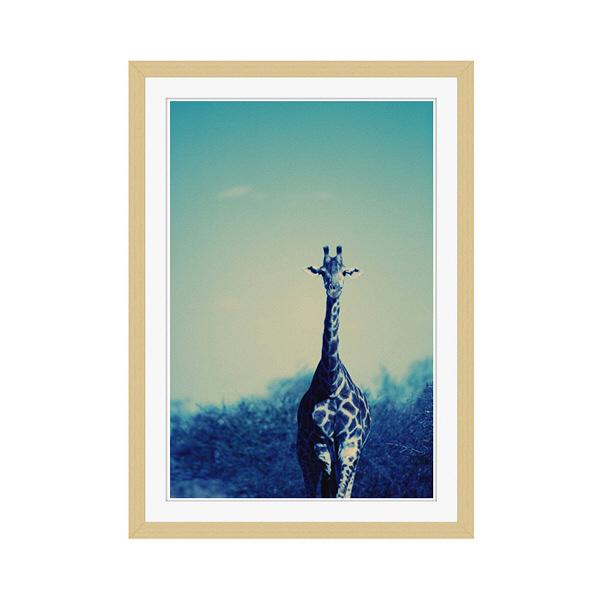 アートプリントジャパン 「Reticulated Giraffe」 フレーム/M/木目 1枚