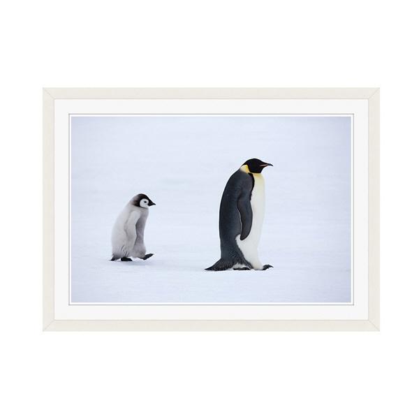 アートプリントジャパン 「Emperor Penguins,Snow Hill Island,Antarctica」 フレーム/M/ホワイト 1枚