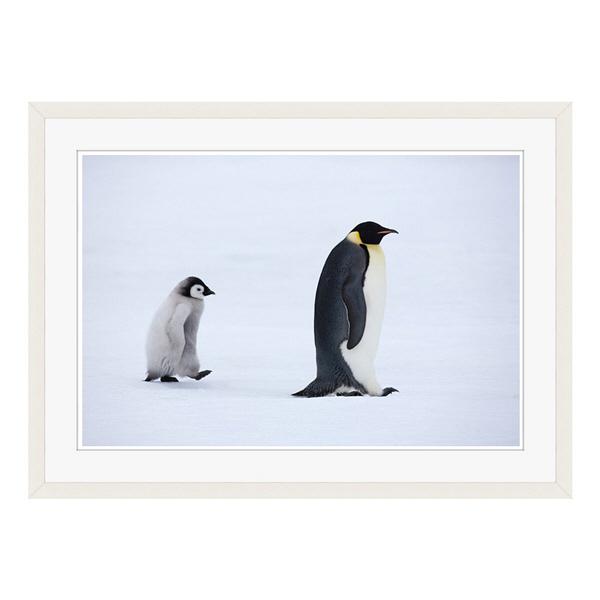 アートプリントジャパン 「Emperor Penguins,Snow Hill Island,Antarctica」 フレーム/L/ホワイト 1枚