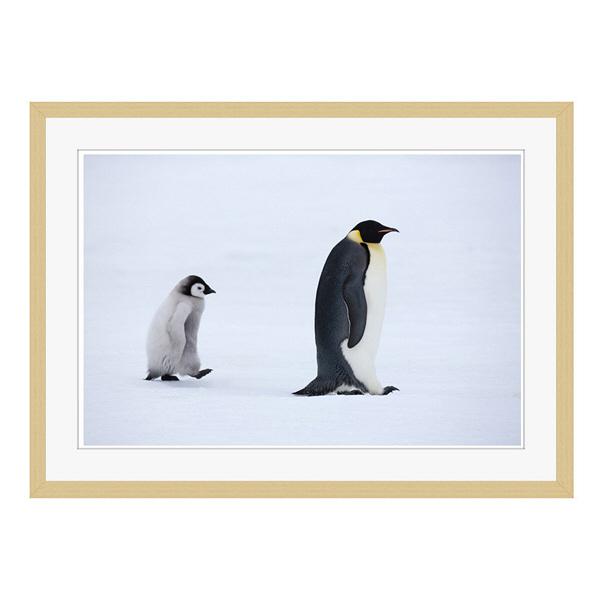 アートプリントジャパン 「Emperor Penguins,Snow Hill Island,Antarctica」 フレーム/L/木目 1枚
