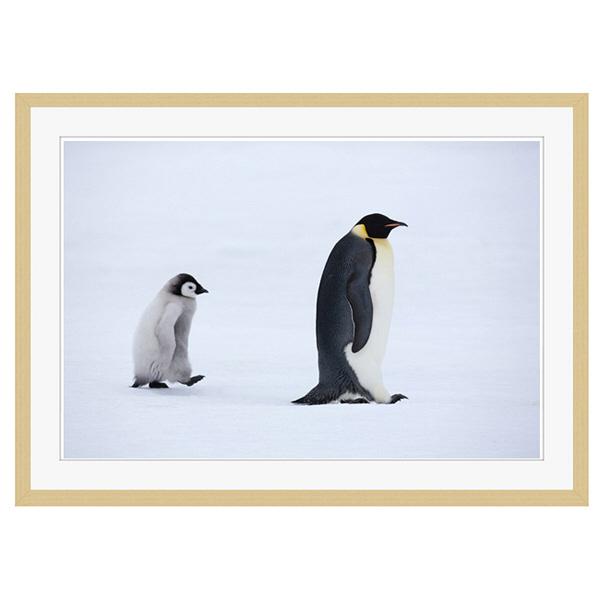 アートプリントジャパン 「Emperor Penguins,Snow Hill Island,Antarctica」 フレーム/XL/木目 1枚