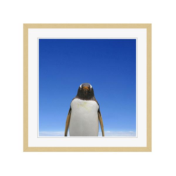 アートプリントジャパン 「青空とペンギン」 フレーム/L/木目 1枚