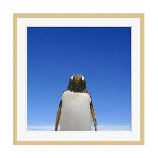アートプリントジャパン 「青空とペンギン」 フレーム/XL/木目 1枚