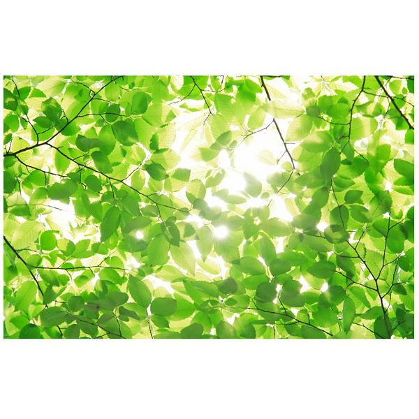 アートプリントジャパン 「新緑と光」 キャンバス/M 1枚