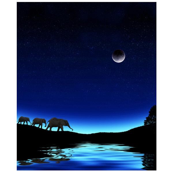 アートプリントジャパン 「Three Elephants Walking Past Water」 キャンバス/M 1枚