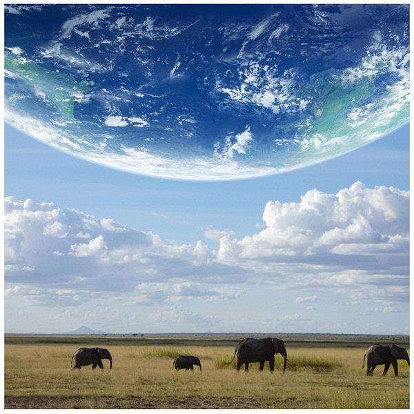 アートプリントジャパン 「地球とアフリカ象」 キャンバス/S 1枚