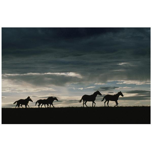 アートプリントジャパン 「馬の群れのシルエットと空(灰色)」 キャンバス/S 1枚