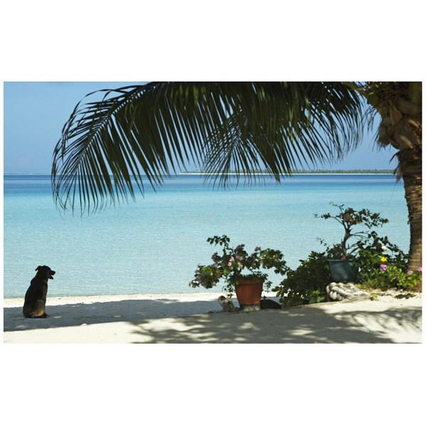 アートプリントジャパン 「lagoon with palm frand and watch dog」 キャンバス/M 1枚