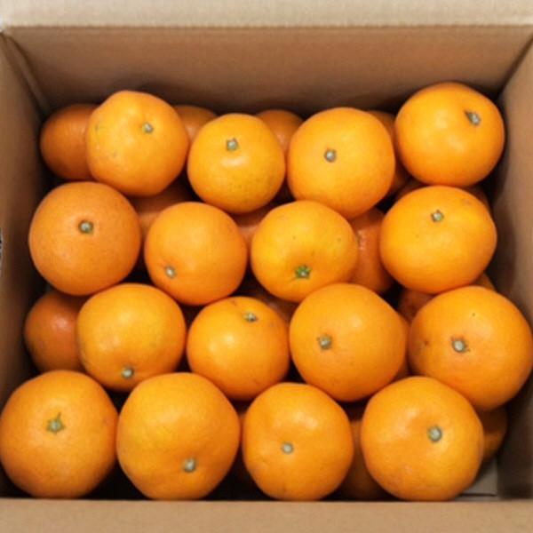 長崎県産 ながさき西海みかん 約3kg (直送品)