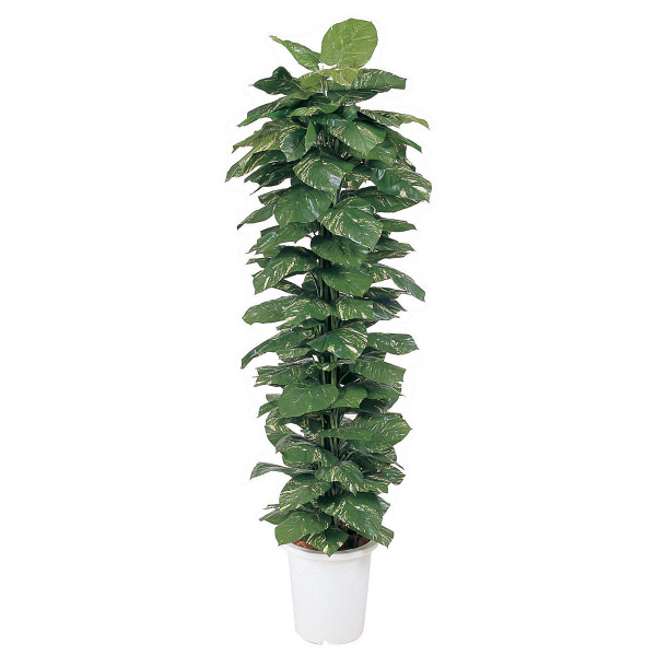 タカショー 人工観葉植物 ヘゴ付ポトス  1.8m