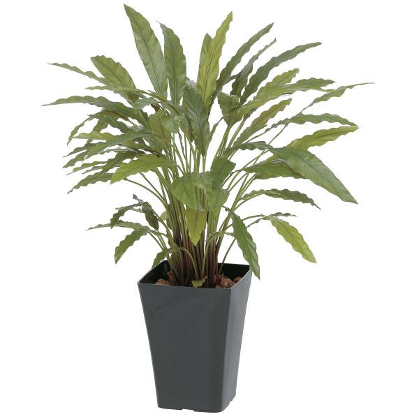 タカショー 人工観葉植物 カラテア グリーン  0.9m