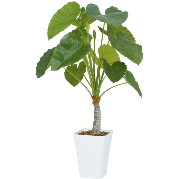 タカショー 人工観葉植物 クワズイモ  1.2m