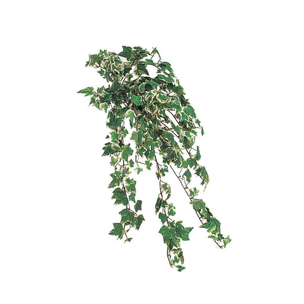 タカショー 人工観葉植物 アイビーブッシュ ダブルカラー ハンギング 50cm 1セット(2本入 )