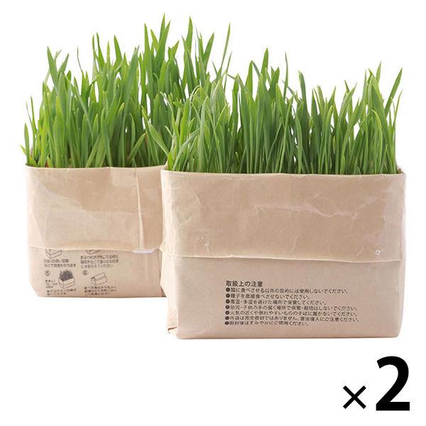 猫草栽培セット 2セット(4個)