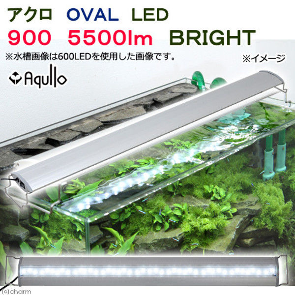Aqullo(アクロ) OVAL LED 900 5500lm BRIGHT Series 274077 1個(直送品)