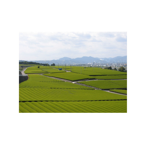 大井川茶園 茶工場のまかない緑茶320g