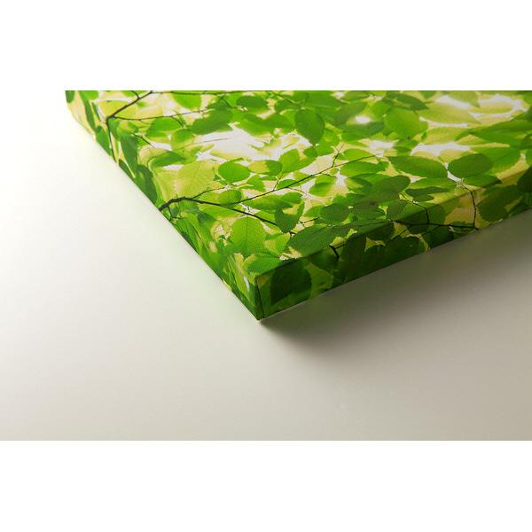 アートプリントジャパン 「新緑と光」 キャンバス/L 1枚